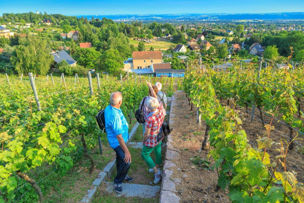Genuss-Wandern durch die Weinberge in und um Weinböhla. © spothits/TV Sächsisches Elbland/Rainer Weisflog