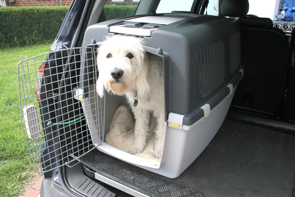 Ratgeber: Damit das Tier nicht zum Geschoss wird. © spothits/Auto-Medienportal.Net