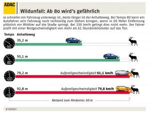Ratgeber: Vorsicht Wildwechsel. © spothits/Auto-Medienportal.Net/ADAC