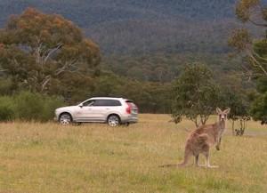 Volvo kann bald auch Känguru. © spothits/Auto-Medienportal.Net