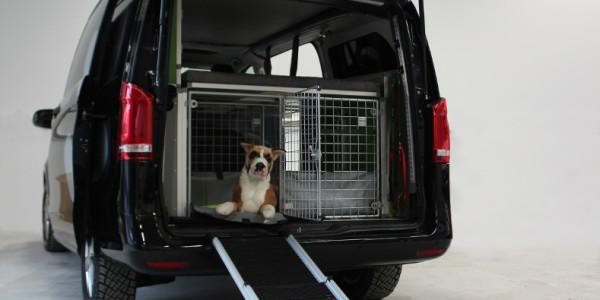 Dogscamper Modular. Foto: spothits/Dogscamper